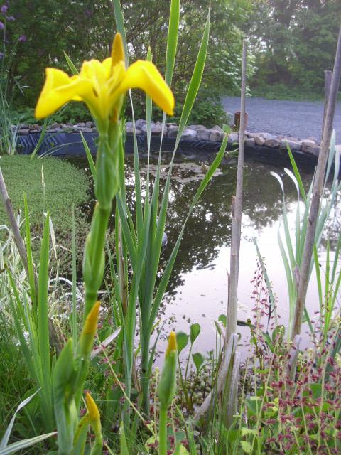 Shauna's Confirmation & garden pics 069